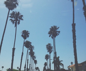 palm trees, summer, and background image