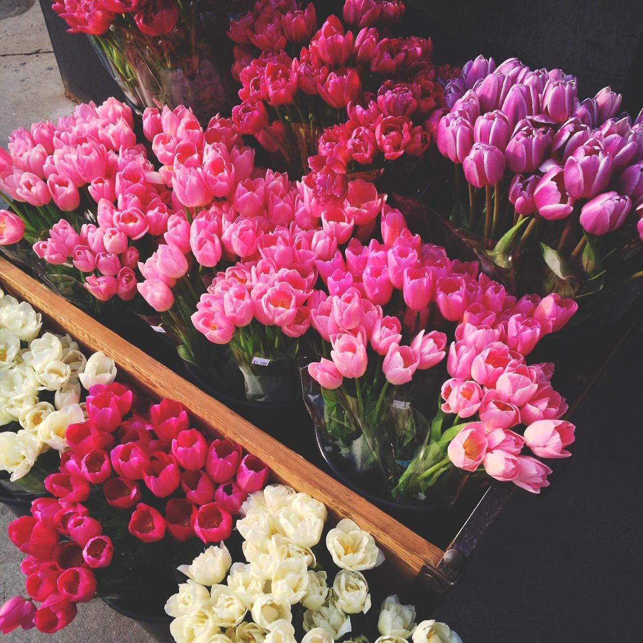 Flowers   via Tumblr shared by @julia_struijk