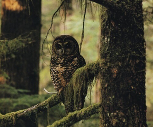 cool, owl, and hipster image