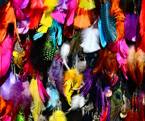 feathers and colors image