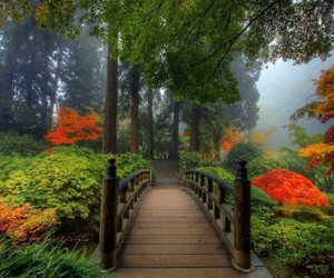 bridges, forest, and nature image