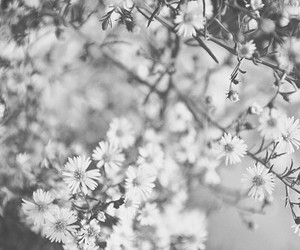 daisy, flower, and pretty image