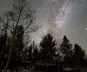 forest, spooky, and night image