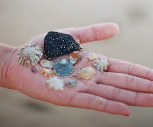 shell, beach, and hand image