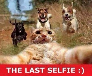 cat, selfie, and funny image