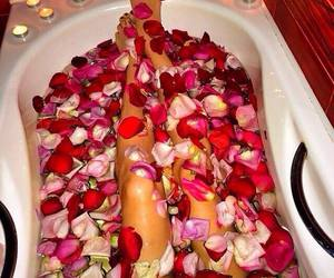 rose, flowers, and legs image