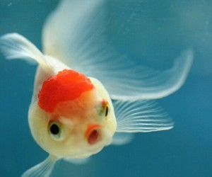 beauty, love, and fish image