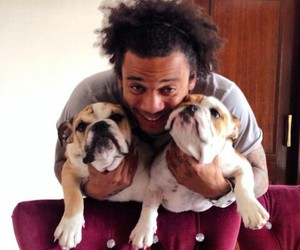 dog, marcelo, and love image