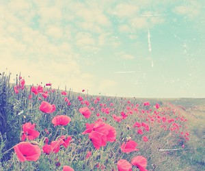 flowers, vintage, and roses image