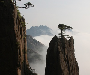 tree, mountains, and nature image