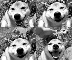 animals, bw, and dog image