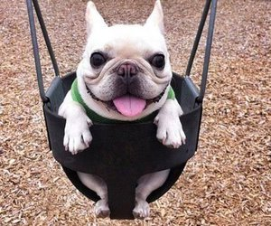 dog, funny, and swing image