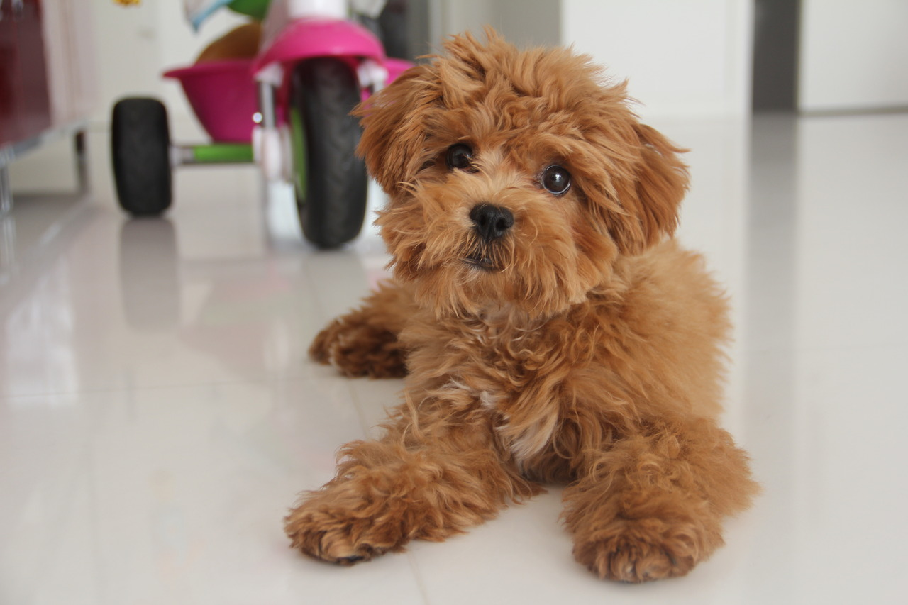 203 images about Dog on We Heart It | See more about dog
