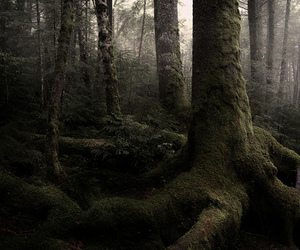 forest, photography, and woods image