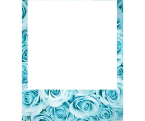 blue, garden, and rose image