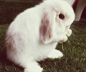 animals, bunny, and rabit image