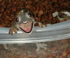 frog, funny, and happy image