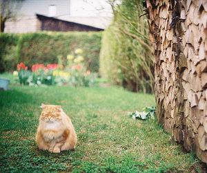 verde, cat, and gato image