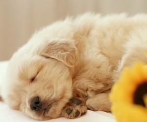 beautiful dog image