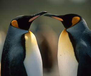 animals, travel, and Antarctic image