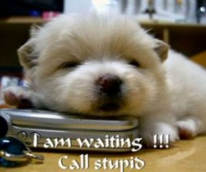 funny animals gallery image