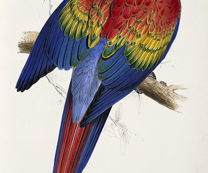 19th century, parrots, and birds image