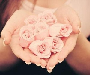 beauty, roses, and earth image