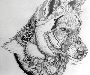 wolf and drawing image