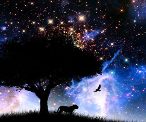 galaxy bird bigcat image