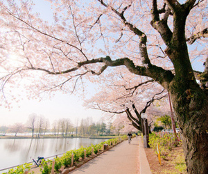 pink, tree, and japan image
