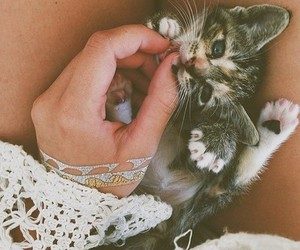 cat, cute, and grunge image