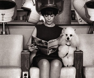 dog, hair, and hairdresser image