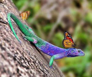 butterfly, lizard, and nature image