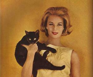 cat, yellow, and fashion image