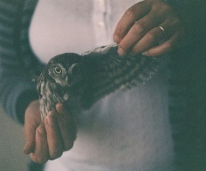 hipster, owl, and green vintage image