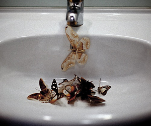 butterfly, sink, and grunge image