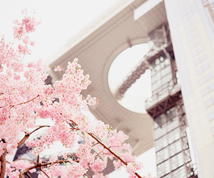 sakura, pink, and japan image
