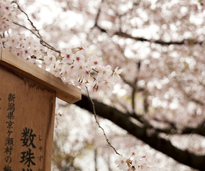 art, cherry blossoms, and flowers image