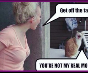 cat, lol, and me image