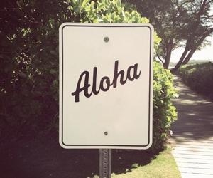 Aloha, summer, and hawaii image