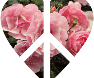 girl, peace, and pink image