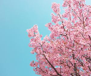 nature, sakura, and sky image