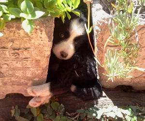 dog, plants, and puppies image