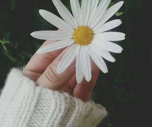 flowers, beautiful, and daisy image