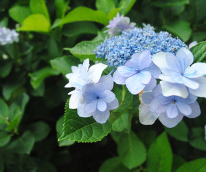blue, flower, and green image