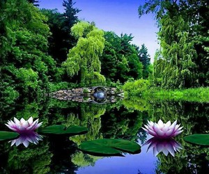 brook, water lily, and nature image