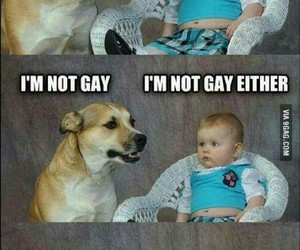 funny, dog, and baby image