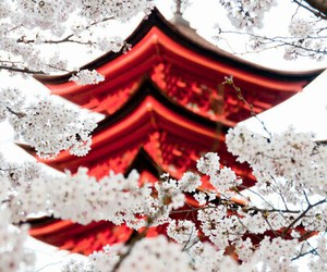 japan, flowers, and japanese image