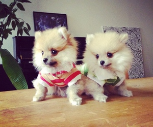 puppies and cute image