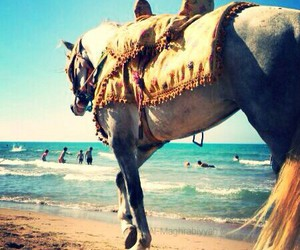 blue, horse, and beach image